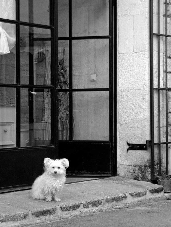Little Dog V