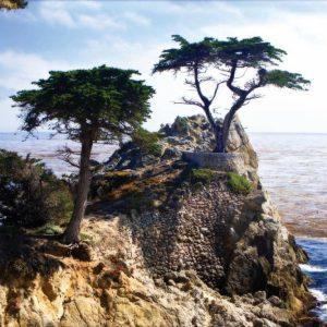 Lone Cypress II