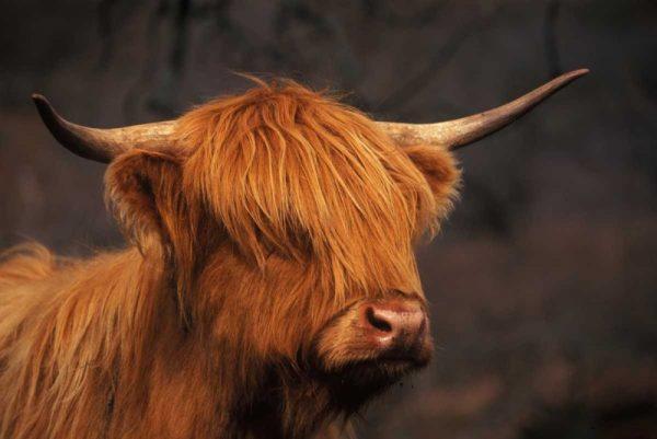 Symbolic of Scotland