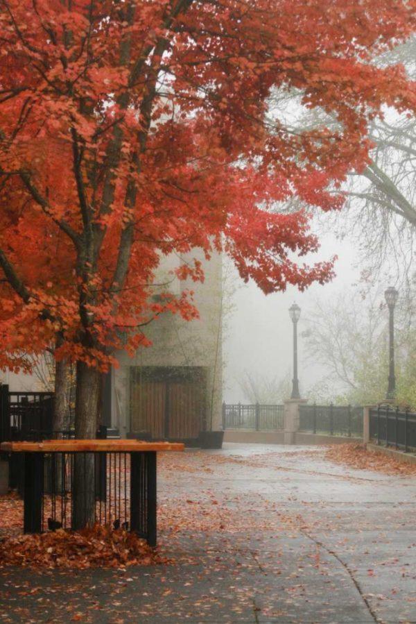 Fall Plaza IV
