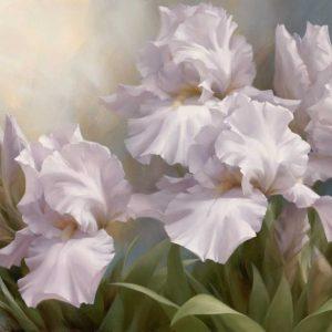 White Iris Elegance II