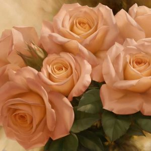 Peach Rose Splendor I