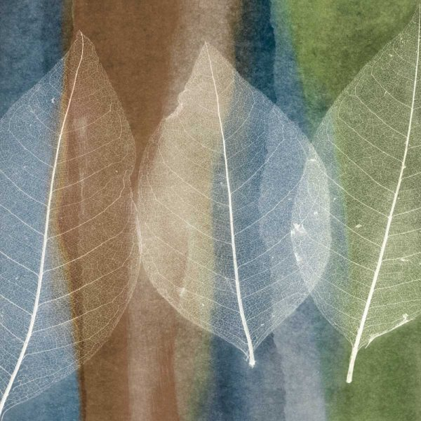 Leaf Structure II