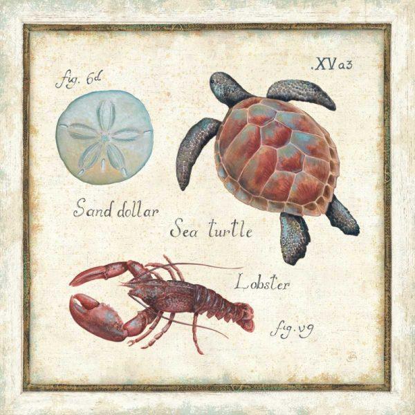 Oceanography II