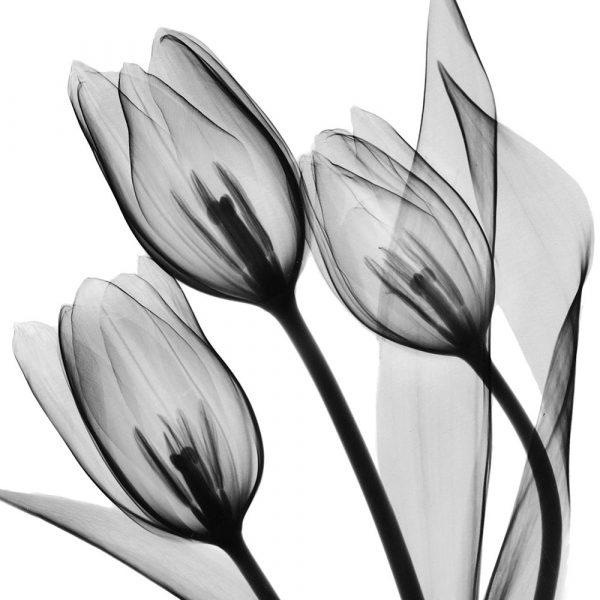 Splendid Monotone Tulips
