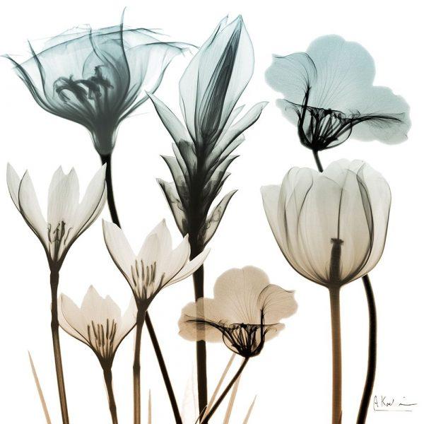 Sandy Floral Cluster 1