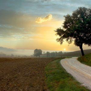 Tuscan Farm Road #1