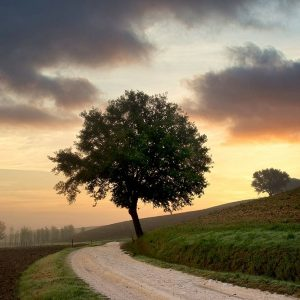 Tuscan Farm Road Sunrise #2