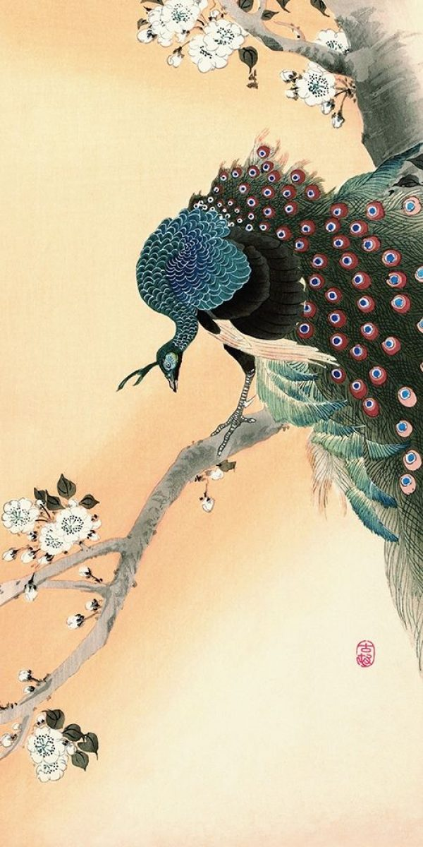 Peacock on a Cherry Blossom Tree
