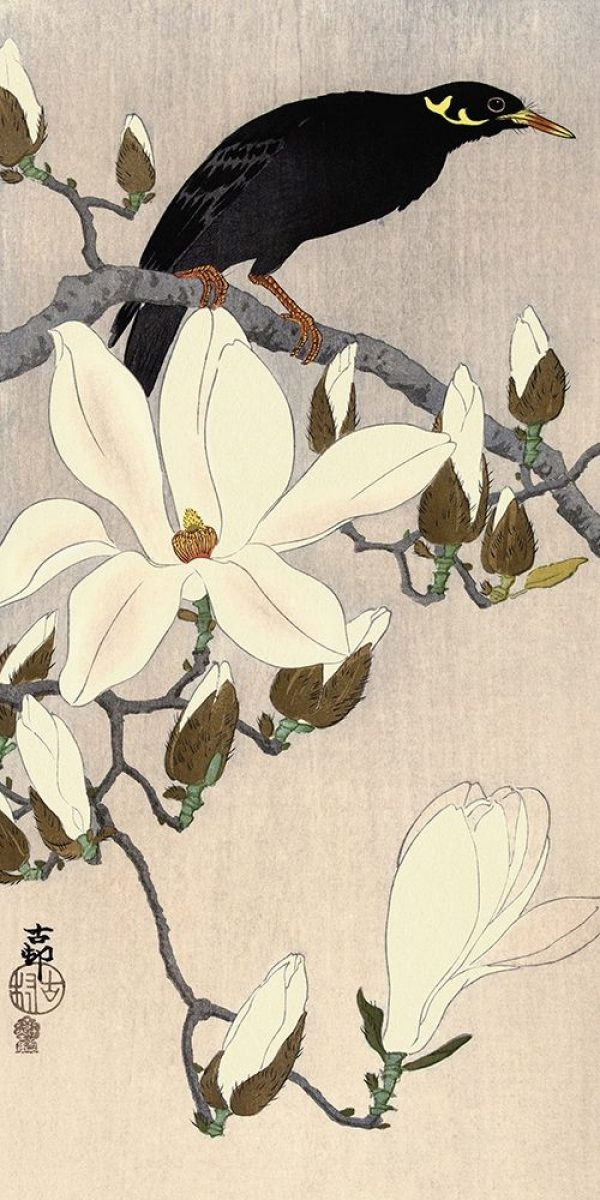 Myna on Magnolia Branch