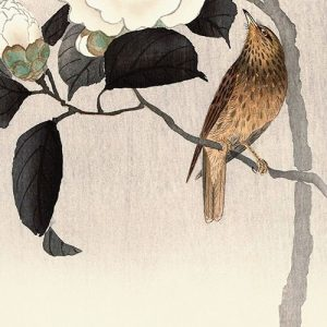 Songbird and Flowering Camellia