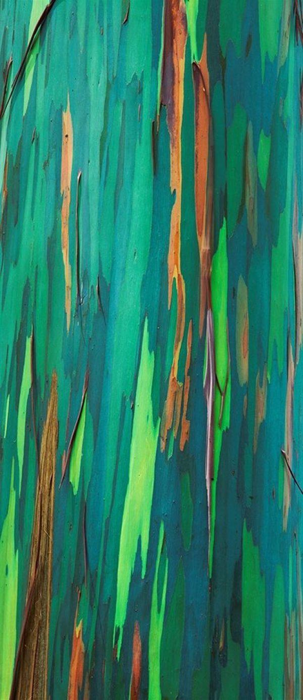 Painted Eucalyptus Bark II