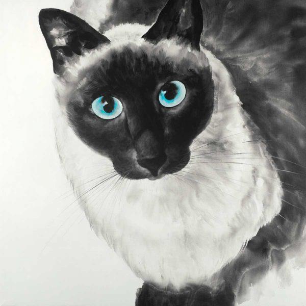 Blue Eyes Siamese Cat