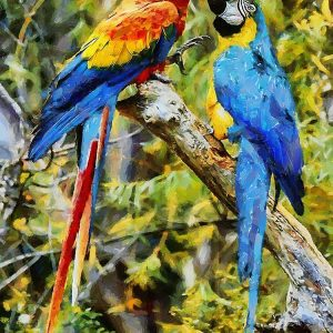 Two Fighting Parrots