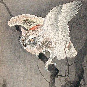 Scops Owl in Moonlight