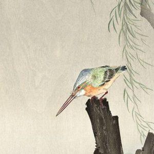 Kingfisher on a tree stump