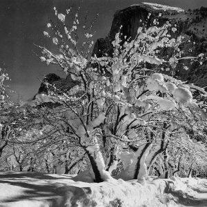 Half Dome-Apple Orchard-Yosemite-California