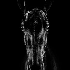 The Horse in Noir