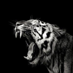 Primal Yawn 4