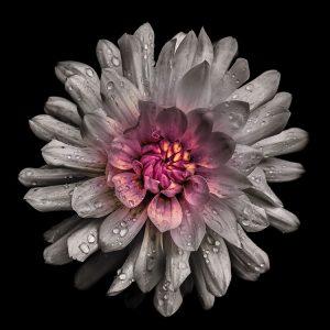 Backyard Flowers White 91